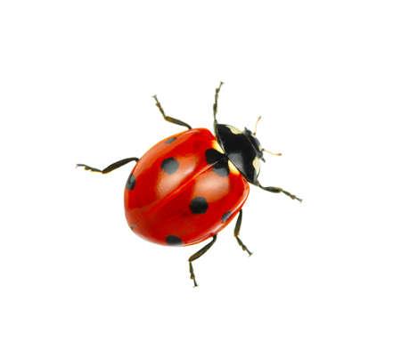 Ladybug op een witte achtergrond Stockfoto