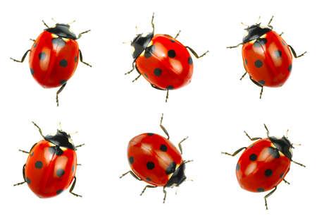 Lieveheersbeestjes op een witte achtergrond Stockfoto