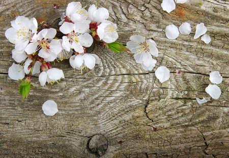 Spring  flower on wood  photo