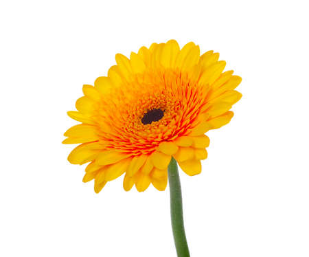 orange flower on a white background  photo
