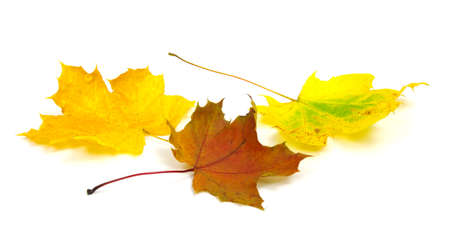 autumn leaves:  autumn leaves isolated on white background