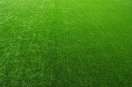 Background of a green grass Banque d'images