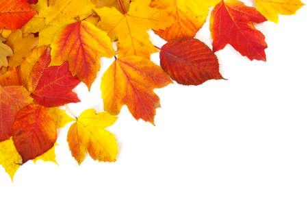 가을에 격리 된 흰색 배경에 나뭇잎 스톡 콘텐츠