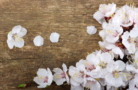 Spring  flower on wood background photo