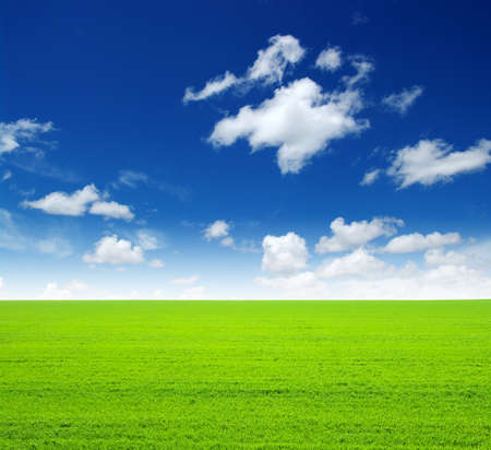 green: field of green grass and sky