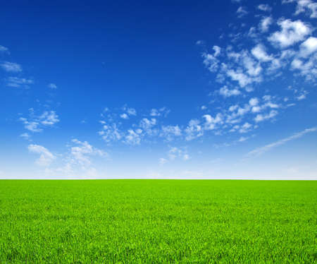 field of green grass and sky