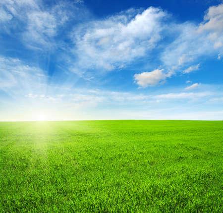 ciel avec nuages: Champ vert, ciel bleu et soleil
