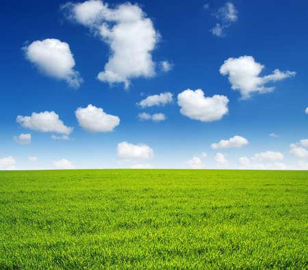 grass land: field of green grass and sky