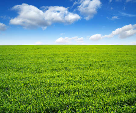 field: field of green grass and sky