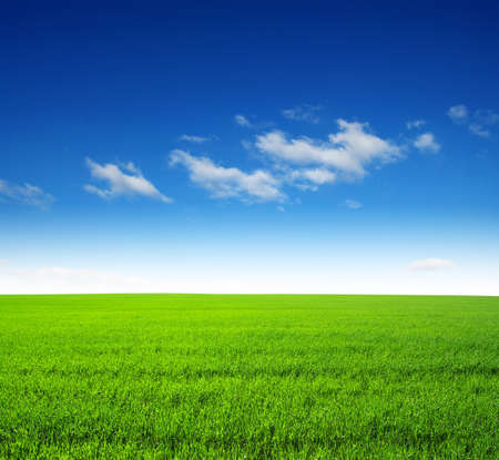 lands: field of green grass and sky