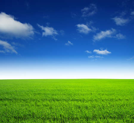 blue sky and fields: field of green grass and sky