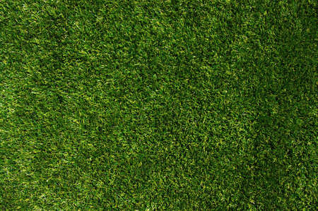 grass: Background of a green grass Stock Photo