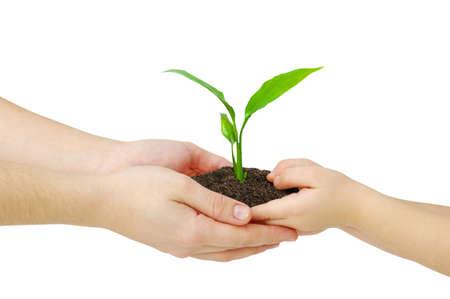 handen van een kind nemen van een plant uit de handen van een moeder Stockfoto