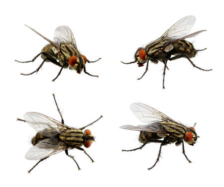 Set of insects fly on white