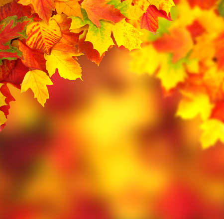 fall of the leaves: Fall, autumn, leaves background. A tree branch with autumn leaves on a blurred background