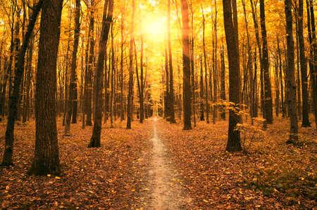 Autumn: árboles de otoño en el bosque