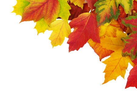 fall border: autumn leaves isolated on white background