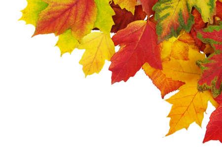 feuilles de l'automne isolé sur fond blanc