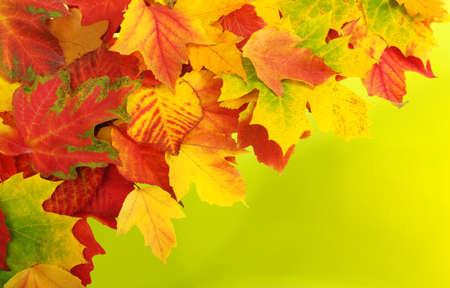 Caída, otoño, hojas de antecedentes. Una rama de un árbol con hojas de otoño sobre un fondo borroso Foto de archivo