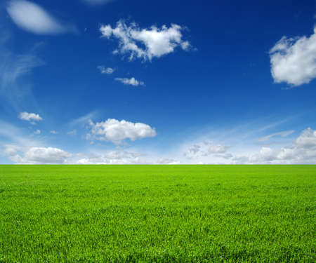 lawn grass: field of green grass and sky