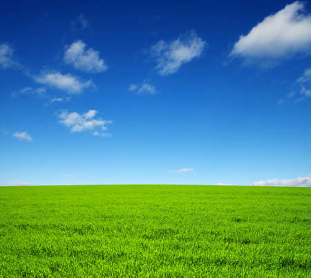 green meadow: field of green grass and sky