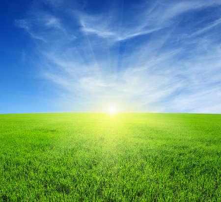 clouds  garden: Green field,blue sky and sun.