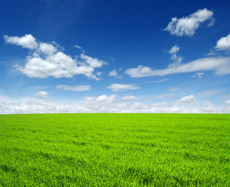 green hills: field of green grass and sky