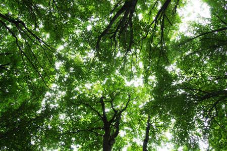 Bäume in einem grünen Wald Standard-Bild - 48659740