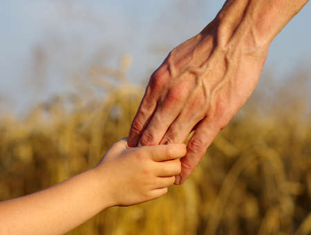 adult hand: hands of child and father on wheat field