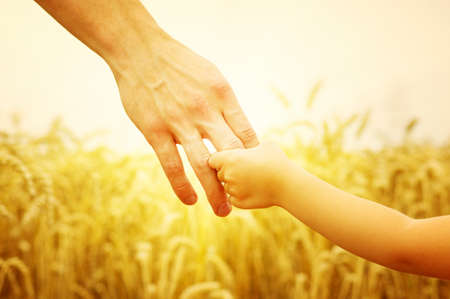 wheat: hands of child and father on wheat field