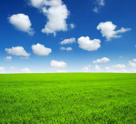 blue and white: field of green grass and sky