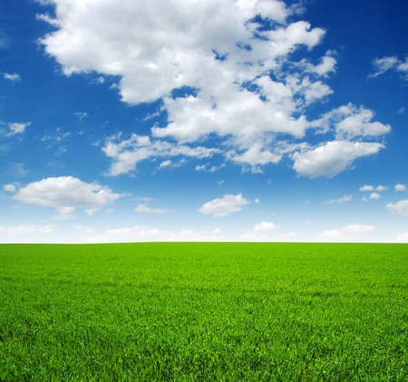 meadow grass: field of green grass and sky