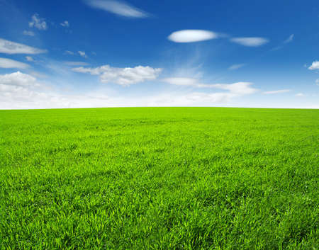 to field: field of green grass and sky