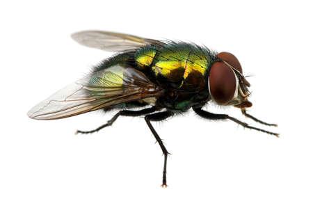 mosca: mosca verde aislado en blanco