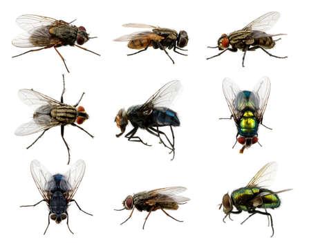Conjunto de insectos volar en blanco