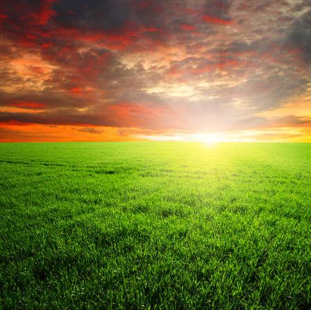 field sunset: green field and beautiful sunset Stock Photo
