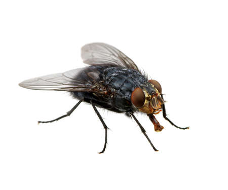 fly isolated on a white Stock Photo