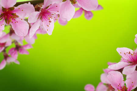 bright color: Blossoms over blurred nature background. Spring flowers.Spring background with green bokeh Stock Photo