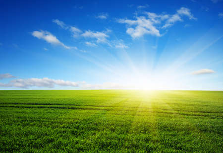 lawn grass: Green field,blue sky and sun.