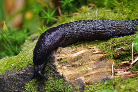 slug: babosa en el bosque verde