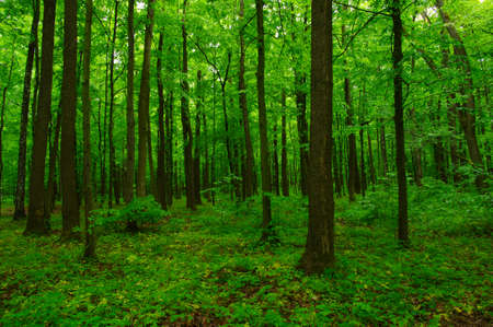 trees with roots: beautiful green forest in spring