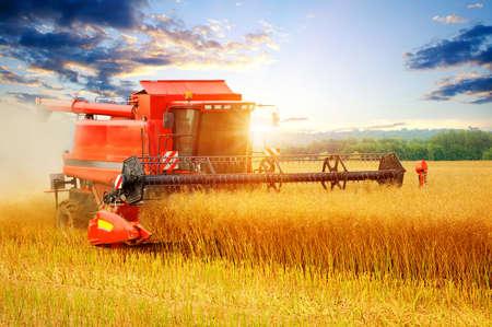 threshing: Combine working in field. Stock Photo