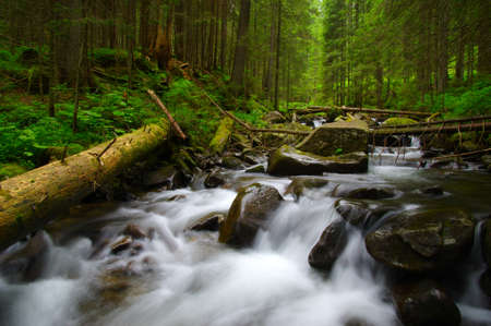 forest stream: Mountain river flowing through the green forest. Stream in the wood. Stock Photo