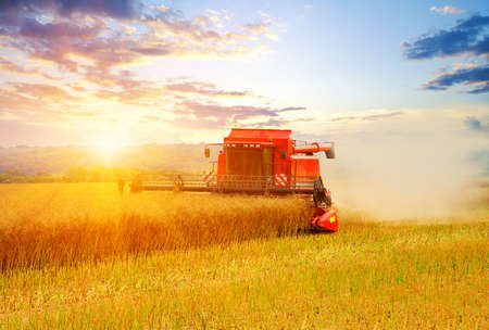 harvests: Combine working in field. Harvester harvests