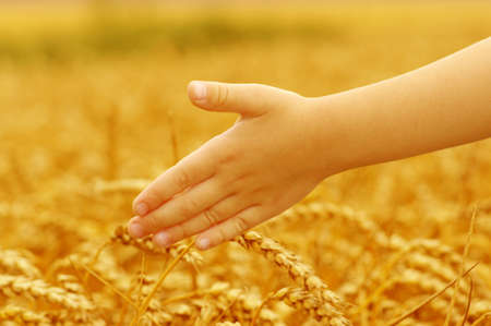 love life: Hands of little girl in the wheat field