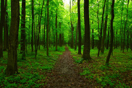 Green forest and the path Stock Photo