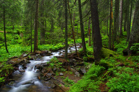 Mountain river flowing through the green forest.