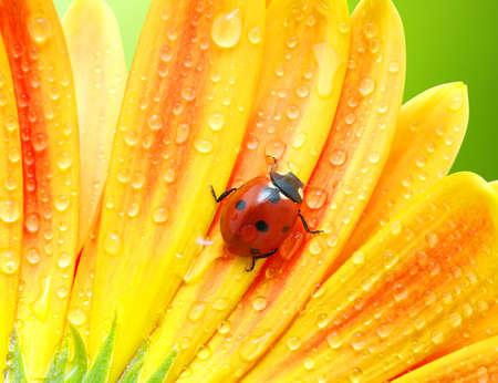 태양에 무당 벌레와 꽃 스톡 콘텐츠