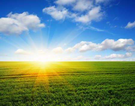 Champ vert, ciel bleu et soleil.