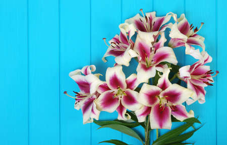 Fresh spring lily flowers on turquoise painted wooden planks